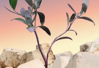Tisha b'Av - Redemption from the Ruins by Yael Shahar